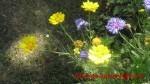 fleur6.jpg